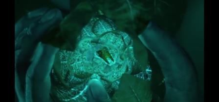 Il dente ritrovato da Pi all'interno di un fiore dell'isola carnivora.